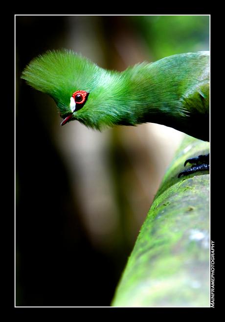 Streetlife bird