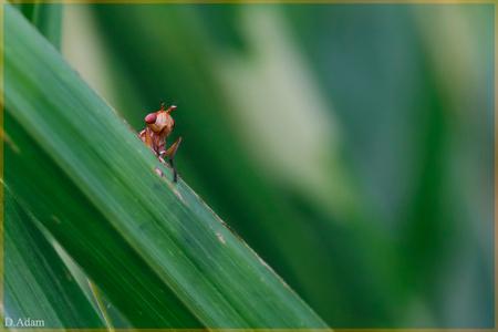 Alien - Zo grappig, in het siergras zag ik in een keer een heeel klein koppie boven een spriet uitkomen en mij aankijken, zo van wat doe jij hier. Het lijkt  - foto door deez66 op 10-08-2012 - deze foto bevat: gras, groen, macro, vlieg, alien, deez66