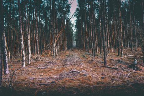 roodbos