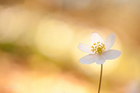 Golden flower...