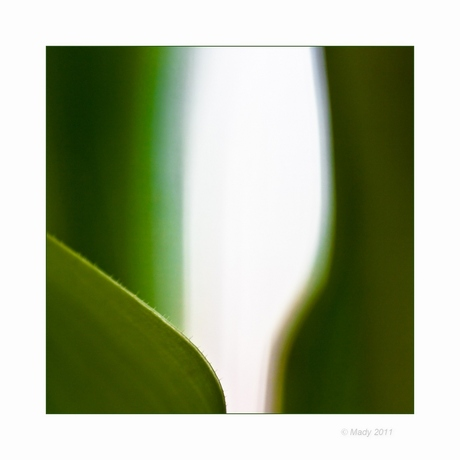 Tulp creatie(f) 7