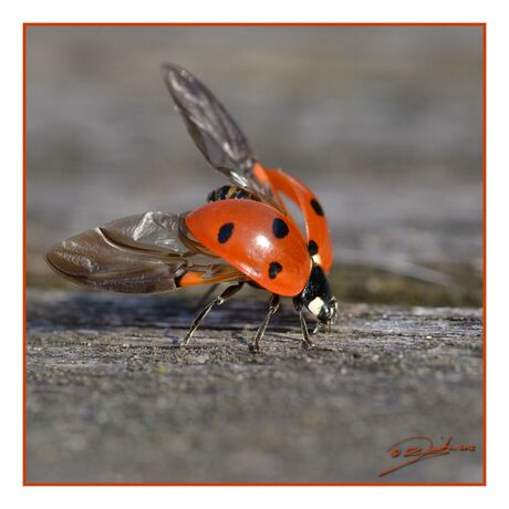 fitness for ladybugs | stretching