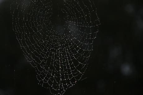 spinneweb in de regen