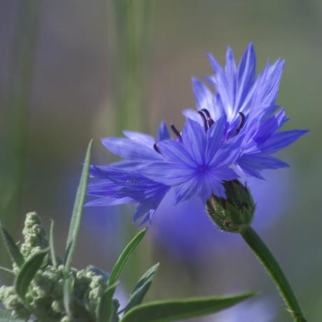 wildflower 13