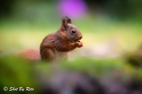 Klein maar fijn #eekhoorn