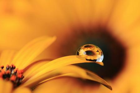 Experimentje - Bloem met druppel experiment. - foto door r.c.a.gerhardt op 26-10-2014 - deze foto bevat: macro, bloem, druppel, geel, dof