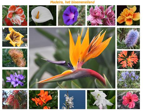 Madeira, het bloemeneiland