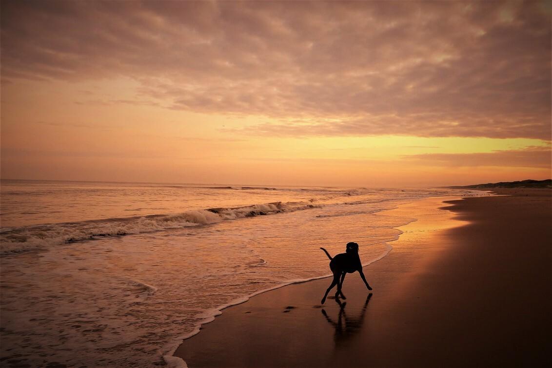 On the beach - - - foto door ErikSFotografie op 28-02-2021 - deze foto bevat: strand, zee, water, natuur, dieren, spiegeling, huisdier, hond, zonsopkomst, zand