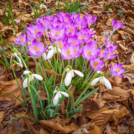 Voorjaar onderweg