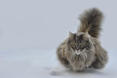 zwevende kat.