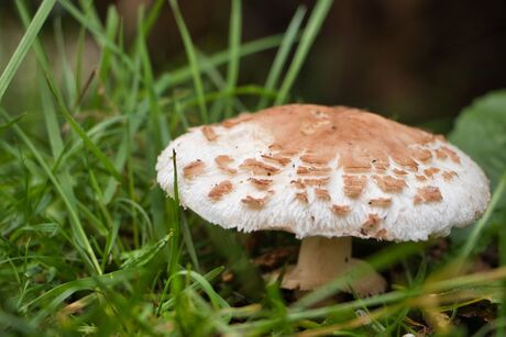 paddenstoelen en zwammen