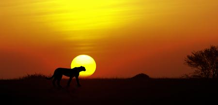 cheetah sunset - - - foto door wd1956 op 17-02-2021 - deze foto bevat: cheetah, tanzania