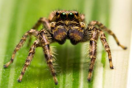 itsie bitsie spider