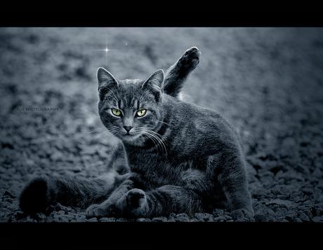 cat model *erotic*