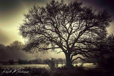 RM PhotographyIMG_3769
