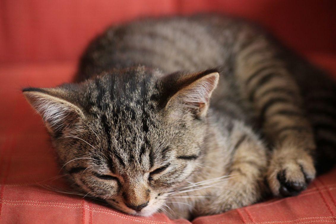 Sleepy one - - - foto door GabriellaStam op 10-01-2016 - deze foto bevat: kleuren, rood, kitten, natuur, bruin, poes, dieren, kat, dier, kater
