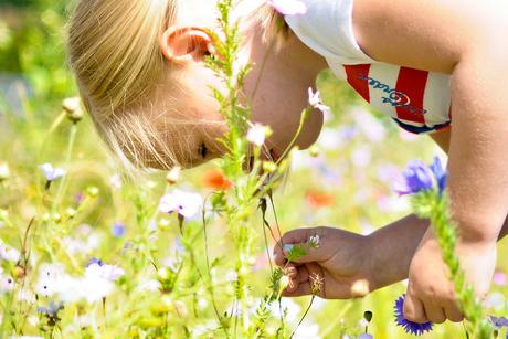bloemetjes plukken 1