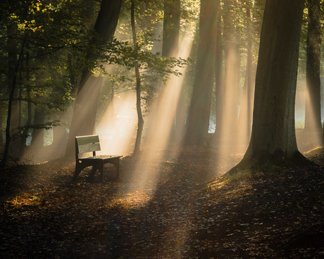 Little bench in the forest