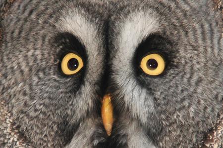 Your eyes only - Het duurde even voordat hij in de camera keek. Graag jullie mening, ik heb hem iets verscherpt. - foto door JJA1 op 02-11-2010 - deze foto bevat: uil, ogen