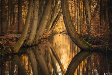 Reflections - Reflections - foto door vwinke op 17-04-2021 - deze foto bevat: reflectie, bomen, bos, water, licht, natuur, atmosfeer, fabriek, ecoregio, mensen in de natuur, water, takje, natuurlijk landschap, hout, kofferbak, zonlicht