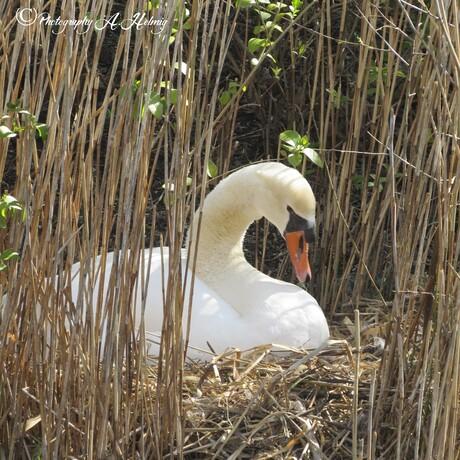 Op nest