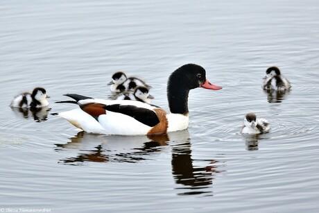 Dear Mother Duck