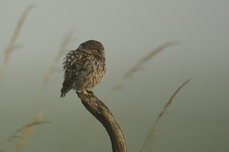Vroege vogel