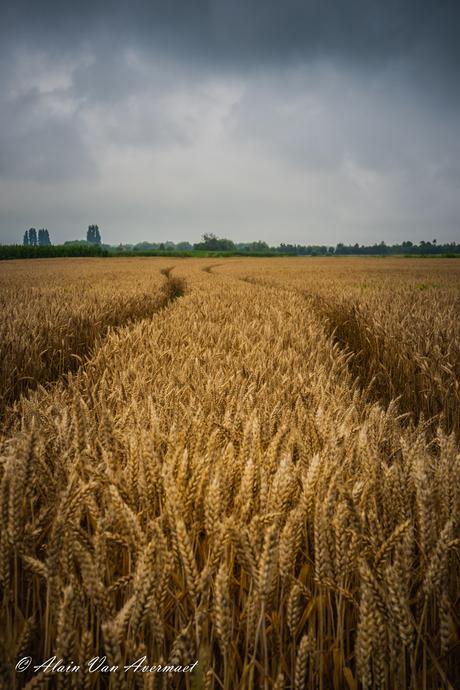 Wie praat, zaait; wie luistert, oogst.