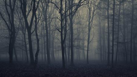 Near Dark - [view full screen in a dark setting] - foto door CHRIZ op 13-04-2021 - deze foto bevat: natuur, donker, winter, mist, bos, 35mm, landschap, bomen, 16:9, water, atmosfeer, fabriek, mist, natuur, boom, natuurlijk landschap, hout, afdeling, takje