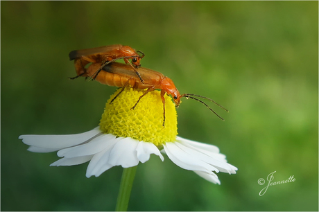 De natuur komt tot leven.