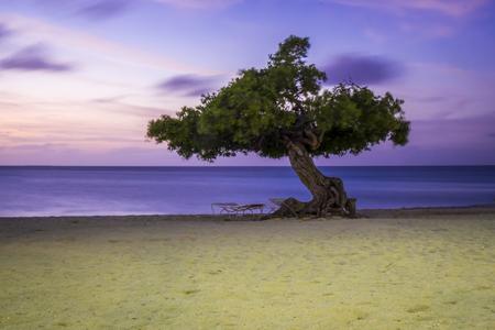 Einde vakantie - Divi Divi boom op het strand  - foto door w.herlaar op 08-04-2021 - locatie: Aruba - deze foto bevat: strand, avondlucht, sunset, boom, divi divi, wolk, lucht, water, fabriek, blauw, natuurlijk landschap, azuur, afdeling, hout, boom