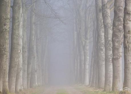 mist laan