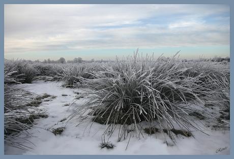 Winters gras...