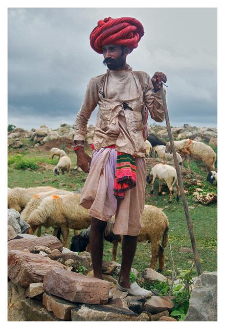 Rabari Shepherd1.jpg