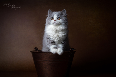 Lady in the bucket!