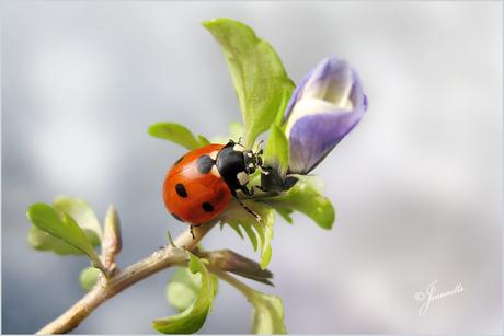 De eerste lentebode..........