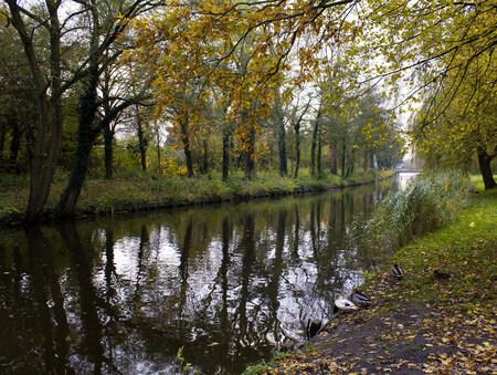 Spiegelingen - Herfst 2012 Boomreflecties in een kanaal - foto door goldy_zoom op 17-11-2012 - deze foto bevat: eenden, natuur, herfst, landschap, bomen, kanaal, weerspiegeling, reflecties