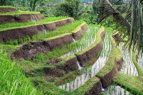 Groene terrassen