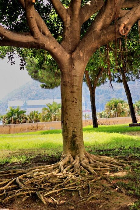 Sprookjesboom in Cartagena