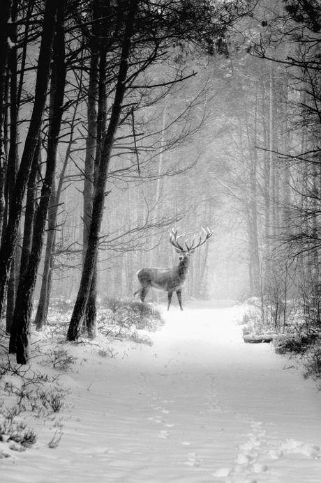 Rudolf the not reindeer!