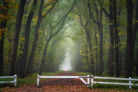 Mistig bospad in de herfst met een wit hek