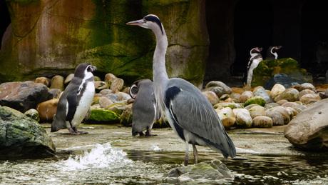 Strange Penguin
