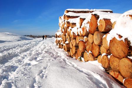 Gereed voor transport - Boomstammen, die gekapt zijn in de Boswachterij Westenschouwen, liggen gereed voor transport. - foto door apadmos op 12-11-2015 - deze foto bevat: lucht, sneeuw, landschap, bos, bomen, boomstammen, schouwen, boswachterij, westenschouwen, adri padmos