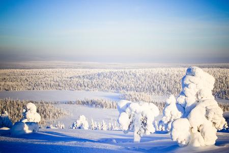 lapland - landschapsfoto genomen in lapland. de boom op de voorgrond doet denken aan de kerstman. - foto door Stefanvdk op 12-10-2012 - deze foto bevat: natuur, sneeuw, ijs, landschap, koud, kou, lapland
