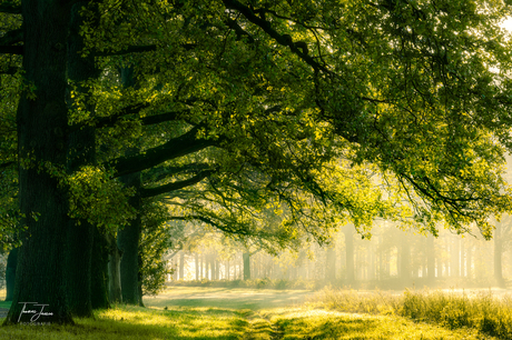 Dreamy green