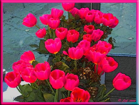 Echte nep-tulpen