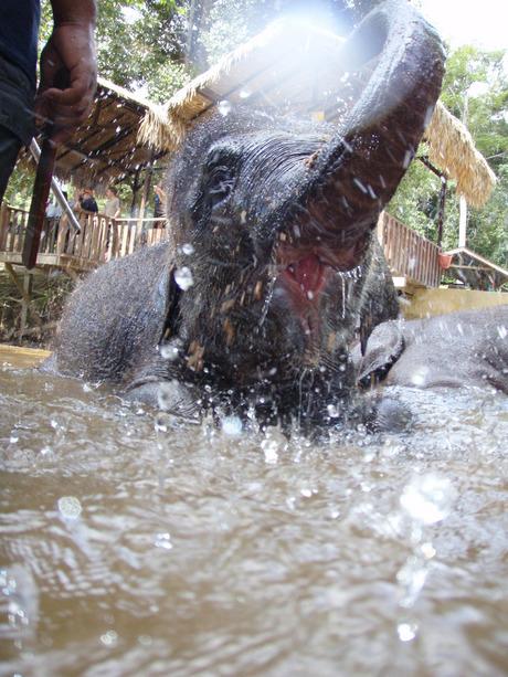 In bad met baby Olifant