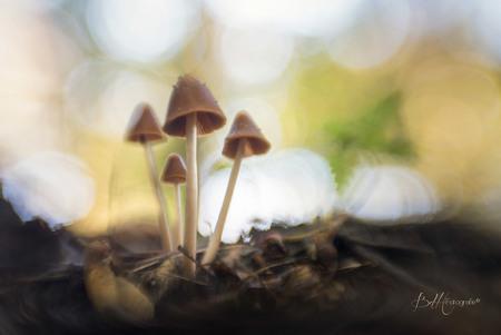 Herfstmagie - Al een tijdje niets geplaatst door omstandigheden. Toch moet ik er af en toe even op uit om de schoonheden van de natuur vast te leggen.  Wat is het - foto door BiancadH op 04-10-2018 - deze foto bevat: groen, macro, boom, natuur, bruin, geel, licht, paddestoel, herfst, blad, bos, nederland, bokeh