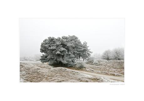 A Hazy Winter Wonderland - V