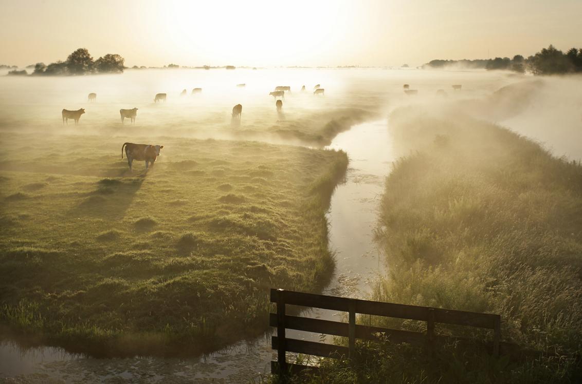 Pinksterochtend - de opgaande zon boven het mistige landschap in de Krimpenerwaard.  Groeten, Bert - foto door b.neeleman op 24-05-2015 - deze foto bevat: koeien, mist, zonsopkomst, polder, spiegling, krimpenerwaard